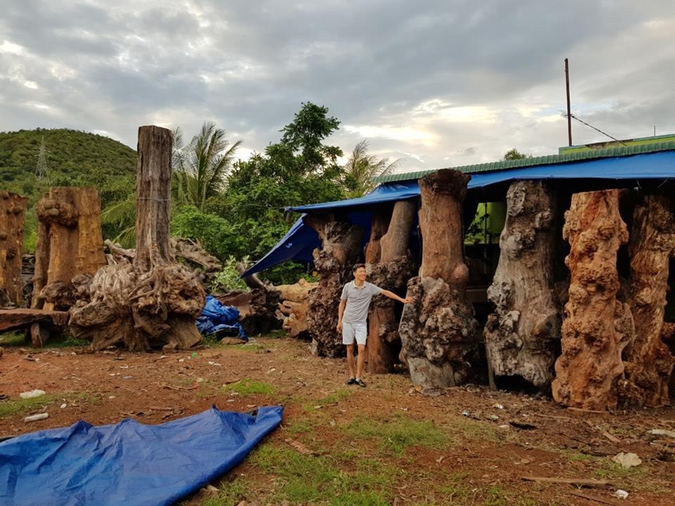 Những phôi gỗ nu nguyên khối từ nhiều loại gỗ quý khác